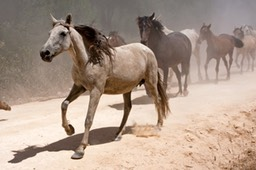 Saca de las Yeguas 2006 & 2007 - Round up of the Wild Horses